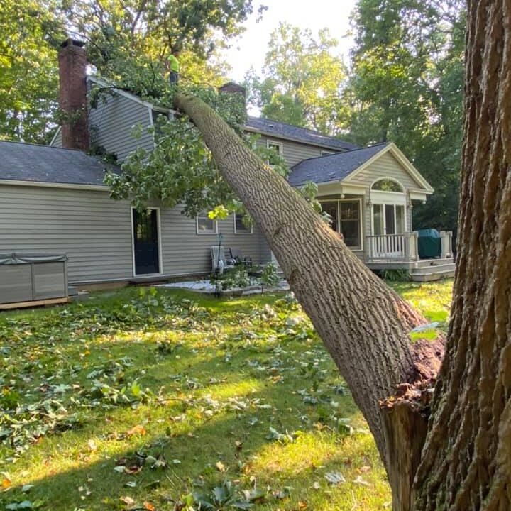 Post-Storm-Tree-Damage-What-to-Do